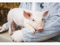 Antioxidants and yeast may have a role to play in lowering stress for pigs