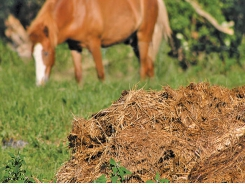 The need for manure to be broken down