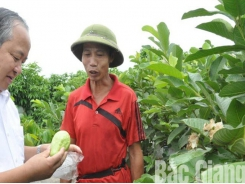 Tan Yen applies science and technology in fruit tree planting to improve productivity