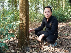 Forest plantations lift Phú Thọ farmers' lives for good