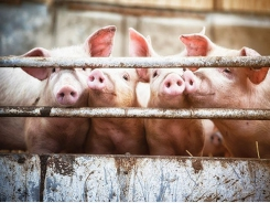 6 lesser-known compounds to control piglet diarrhea