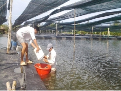 Cần Giờ has enormous potential for high-value aquatic products, swift nests
