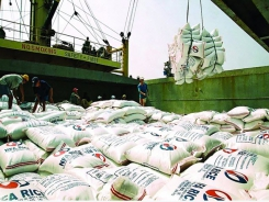 Rice export price hits new record high
