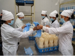 Supply chain the key to sustainable farming production in Vietnam