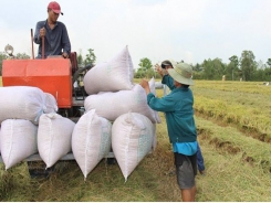 Central bank urges more support for rice farmers