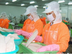 Vietnam's pangasius export value slides for ninth consecutive month