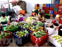 Vietnam imports 451 million USD worth of fruit, vegetable in 4 months