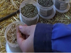 Grass protein to be tested in organic pig feed