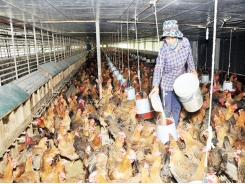 Animal feed prices rise sharply, farmers hit hard