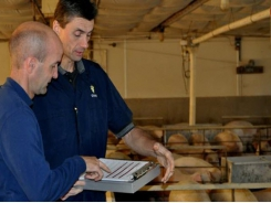 Study identifies key traits of swine veterinarians
