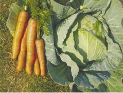 Organically grown vegetables VS conventionally grown vegetables
