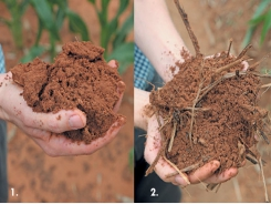 Pursuing soil health precisely