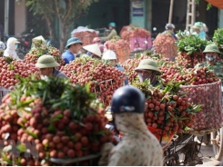 Vietnam seeks to export fresh fruits, vegetables to Thailand