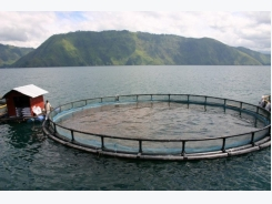 Can Aquaculture Save the World?