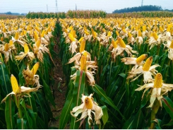 The farming philosophy of a top maize farmer