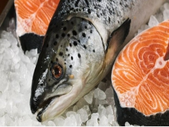 Gene expression response to sea lice in salmon skin identified