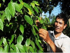 Enterprises call for help to re-export black pepper stuck in Nepal