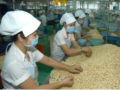 Vietnamese cashew nuts to be on tables of European countries