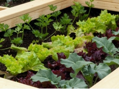 How to Grow a Small-Space Vegetable Garden
