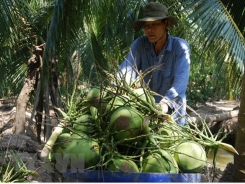 Ben Tre calls for more investment in agriculture