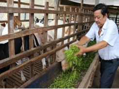 Agricultural by-products improve farmers' income, benefit environment