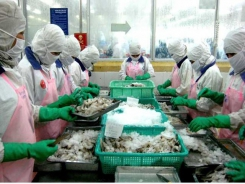 Domestic seafood sales hindered by administrative procedures
