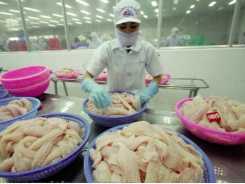 Vietnam's pangasius exports to the US slumped in the first eight months of 2019