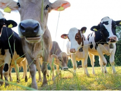 Methane cutting efforts shift focus to pasture-fed cattle