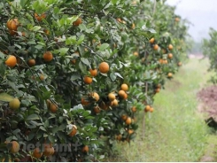 Seminar discusses organic fruit cultivation