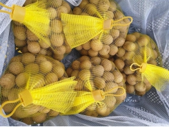 Trade Office warns of packaging mistake on longan exports to Australia