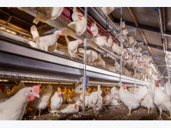 Impact on hen bone integrity in cage-free environments