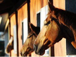 Prebiotics may do more harm than good in horses