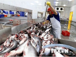 Saudi Arabia to import seafood from 12 Vietnamese firms