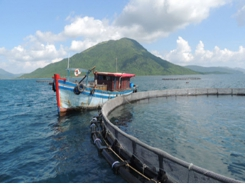 Vietnam poised to become top player in ocean aquaculture