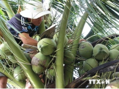 Ben Tre moves to boost agricultural product exports