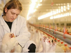 Poultry, egg conference covers animal welfare, sustainability trends