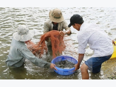 Action plan for development of shrimp industry promulgated