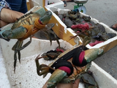 Crab price highest in 5 years