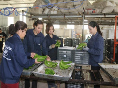 Hoa Binh develops market for key agricultural products