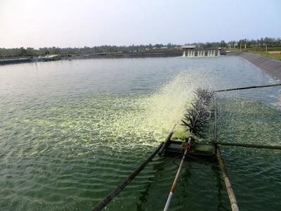 Bí quyết nuôi thành công tôm nước mặn trong ao nước ngọt - Lý thuyết đến thực tiễn