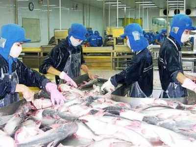 Prices of pangasius fish, poultry eggs in Mekong Delta continue to decline