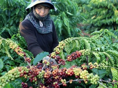 Coffee exports earn Vietnam 1.3 million USD in first 4 months