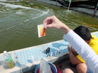 Six tips for water quality management in shrimp farming