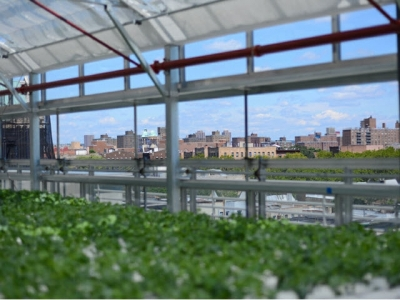 A Hydroponic Rooftop Farm Grows in the Bronx