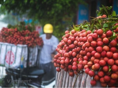 Bac Giang earns 5.4 trillion VND from lychees