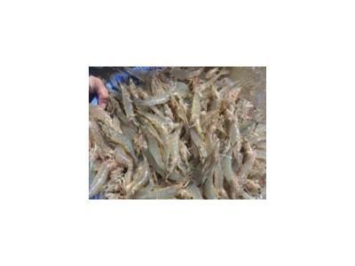Bệnh đốm trắng ở tôm nuôi và công nghệ nuôi tôm nhằm phòng, chống bệnh đốm trắng
