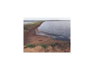 Độc tính nitrit bị tác động bởi tính nhạy cảm của loài và các điều kiện môi trường