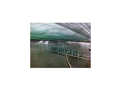 Thực hành nuôi trồng thủy sản tốt (GAP) và việc duy trì an toàn sinh học trong nuôi tôm