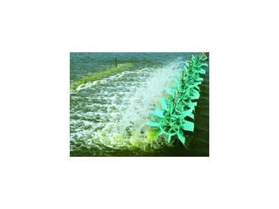 Giải pháp kiểm soát tảo lam trong ao tôm