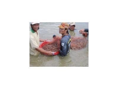 Lợi ích sử dụng chế phẩm sinh học trong nuôi trồng thủy sản